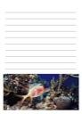 Homeschool Helper Online's Free Coral Reef Notebooking